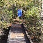 Muddy Creek boardwalk