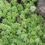 Moss at Muddy Creek